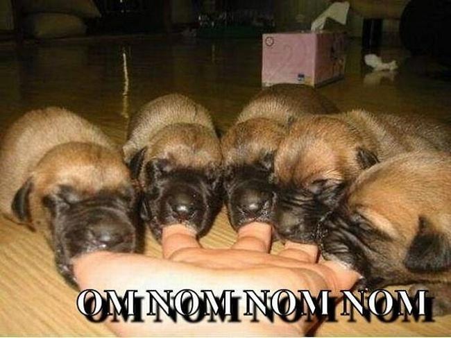 Обман наивных - пять щенков сосут пальцы.