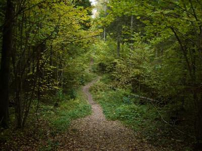 Покайнский лес.Латвия S2435169