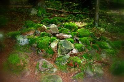 Покайнский лес.Латвия S8321023